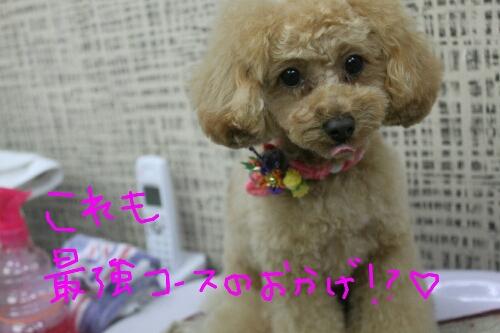 電子レンジ_b0130018_17535293.jpg
