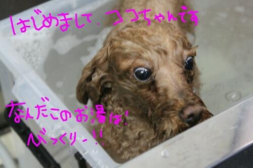 電子レンジ_b0130018_17545786.jpg