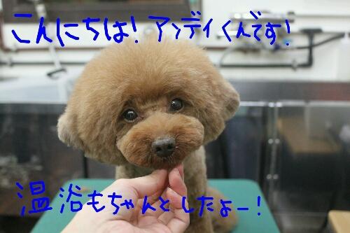 電子レンジ_b0130018_17583576.jpg