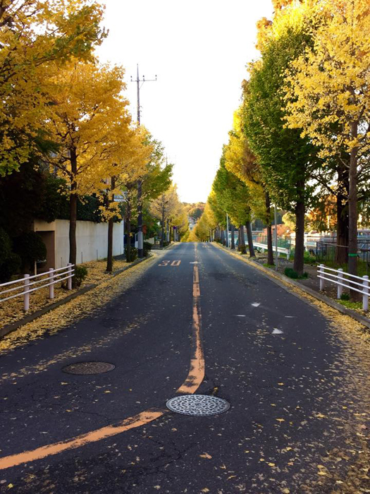 川崎市麻生区王禅寺西 / iPhone 6_c0334533_20091212.jpg