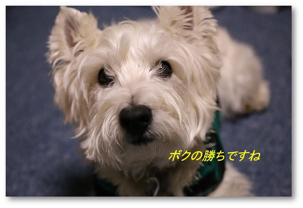 ☆ 根気負け ☆_a0161111_00134170.jpg