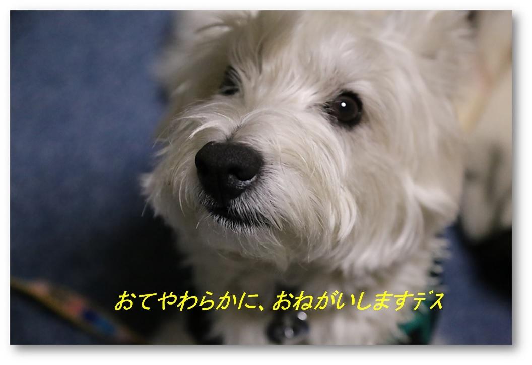 ☆ 根気負け ☆_a0161111_00262779.jpg