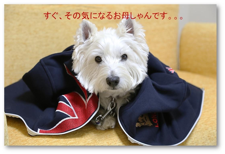 ☆ イギリス ロンドン ジップジャケット ☆_a0161111_23431123.jpg