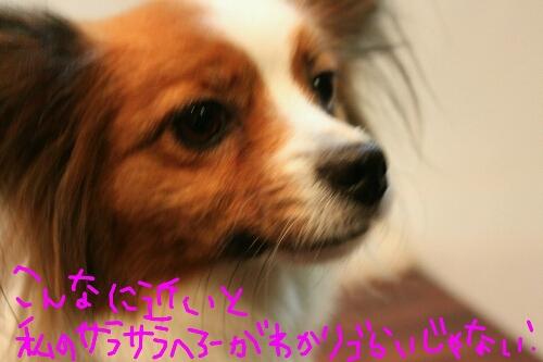 b0130018_2363893.jpg