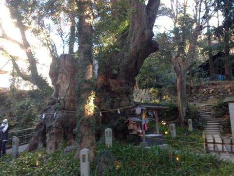 パワースポット☆来宮神社に行ってきました!_a0253729_1029594.jpg