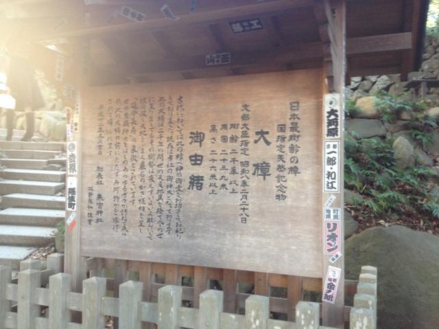 パワースポット☆来宮神社に行ってきました!_a0253729_10332412.jpg