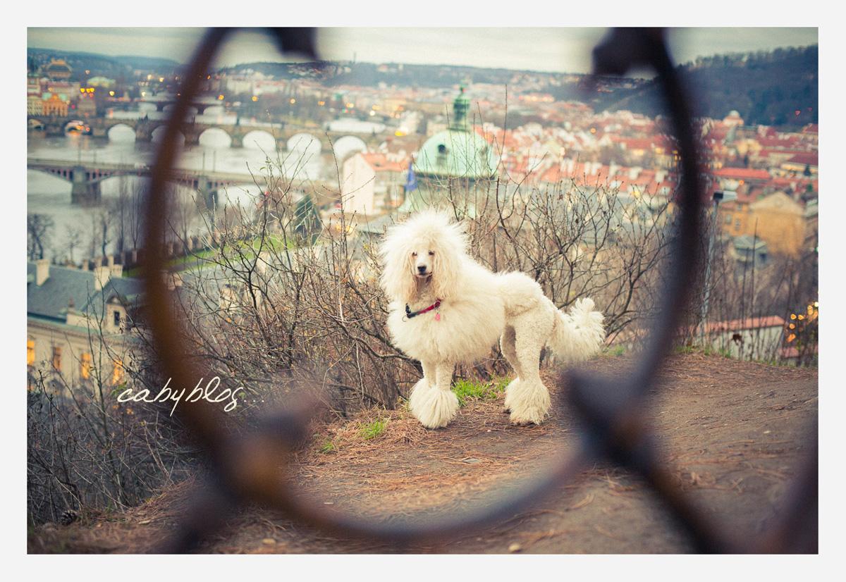 プラハのプードル_b0127032_02329100.jpg