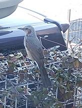 鳥さん、いらっしゃ~い_f0130259_15584249.jpg