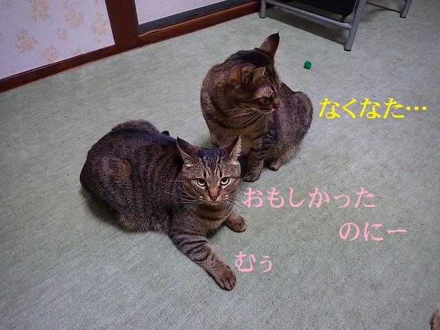 a0159490_1443068.jpg