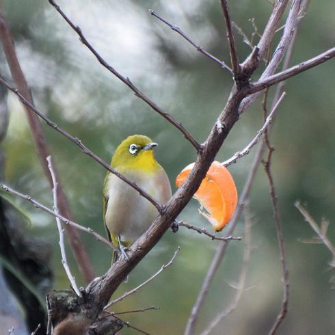 鳥は中々難しい....。_f0099102_18105241.jpg
