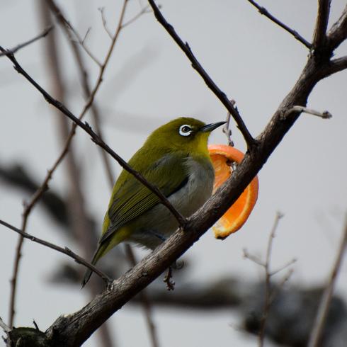 鳥は中々難しい....。_f0099102_18112926.jpg