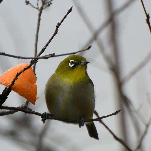 鳥は中々難しい....。_f0099102_18114288.jpg