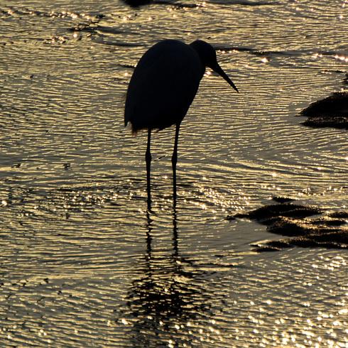 鳥は中々難しい....。_f0099102_18121279.jpg
