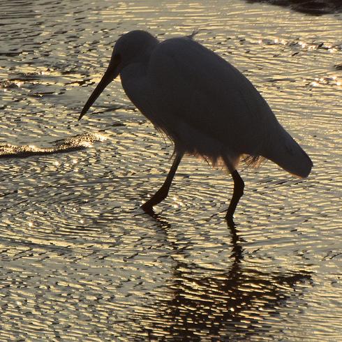 鳥は中々難しい....。_f0099102_1812313.jpg