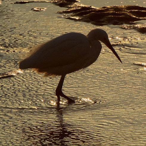 鳥は中々難しい....。_f0099102_1812513.jpg