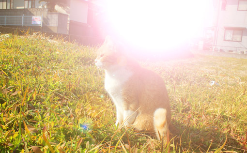 野外で猫とお散歩。_a0329820_14551645.jpg