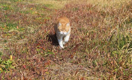 野外で猫とお散歩。_a0329820_14551955.jpg