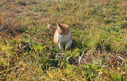 野外で猫とお散歩。_a0329820_14553063.jpg