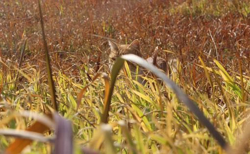 野外で猫とお散歩。_a0329820_14553681.jpg