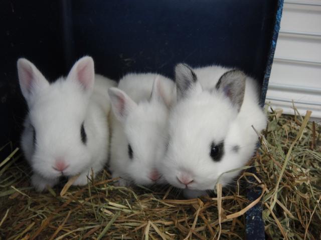 150110 ウサギ・ハムスター_f0189122_14361865.jpg