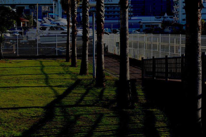 初冬の頃のカメラ散歩_d0246136_17235483.jpg