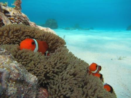 キレイな海で体験ダイビング☆_a0189838_2361863.jpg