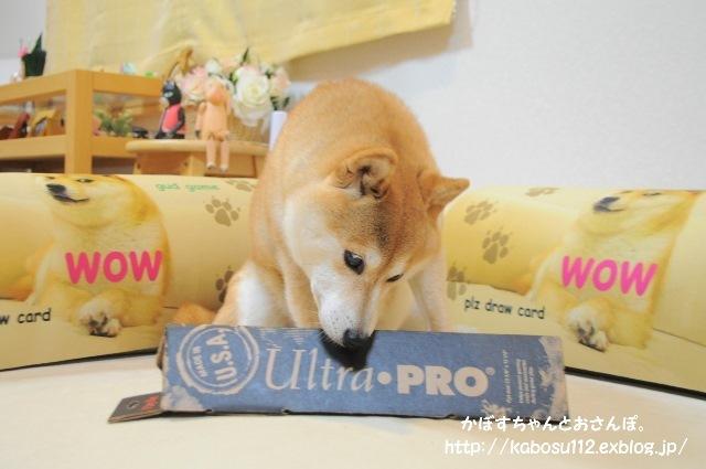 一枚の写真から(松江犬猫の会)_a0126590_23162734.jpg