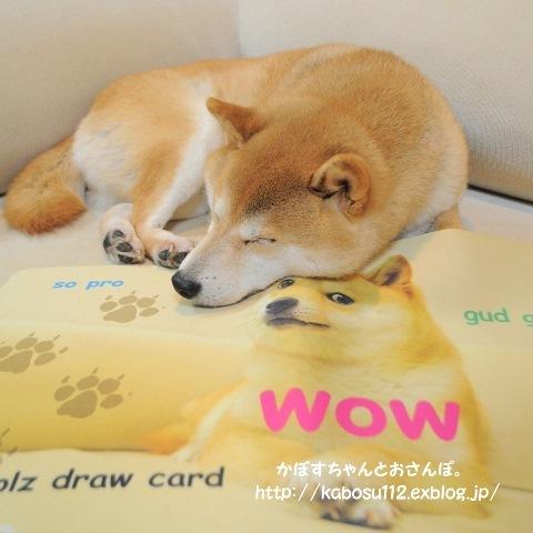 一枚の写真から(松江犬猫の会)_a0126590_23173203.jpg