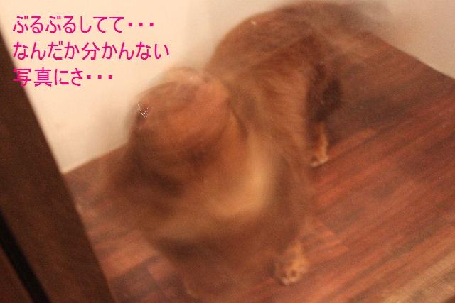 b0130018_13432760.jpg