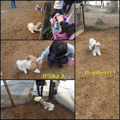 b0306158_20113780.jpg