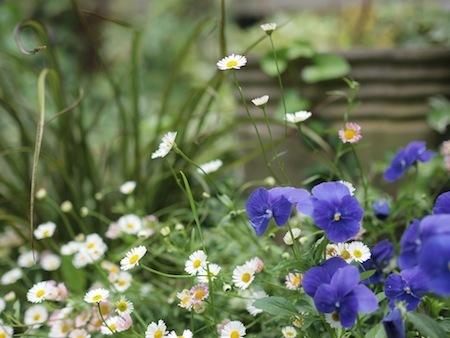初夏の庭_a0335560_03013514.jpg