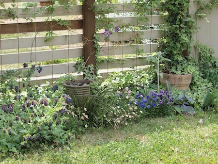 初夏の庭_a0335560_03013599.jpg