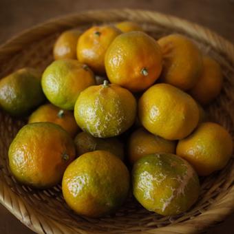 柑橘類を朝に_c0200002_19514476.jpg