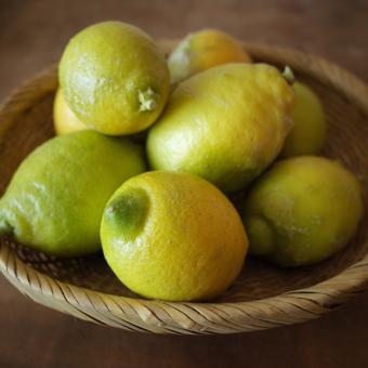 柑橘類を朝に_c0200002_19515478.jpg