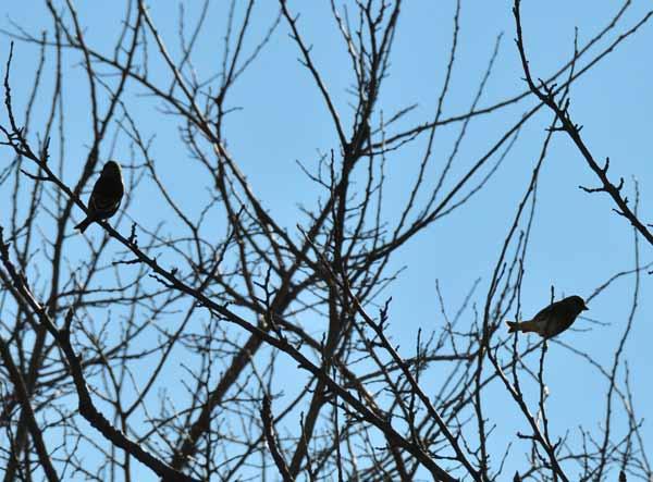 鳥撮り散らかした~_e0097534_12423194.jpg