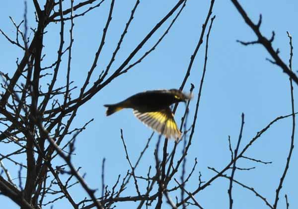 鳥撮り散らかした~_e0097534_12423985.jpg