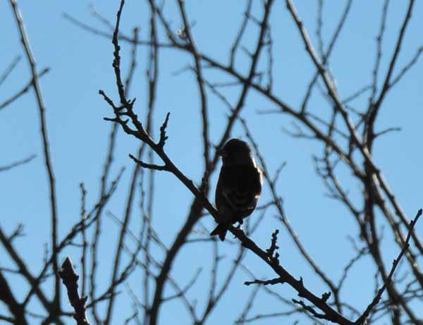 鳥撮り散らかした~_e0097534_12424840.jpg