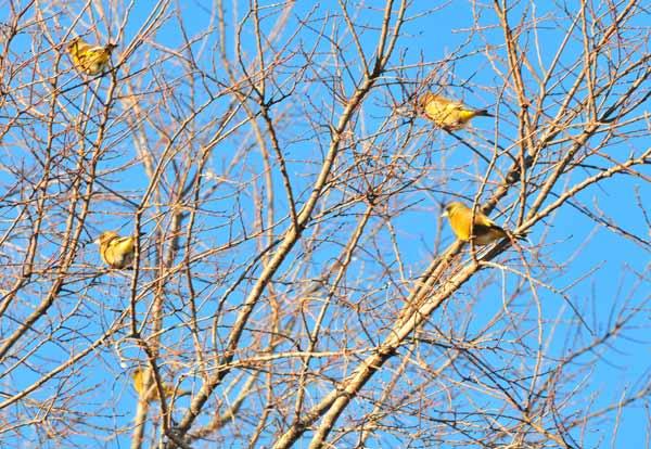 鳥撮り散らかした~_e0097534_1254227.jpg