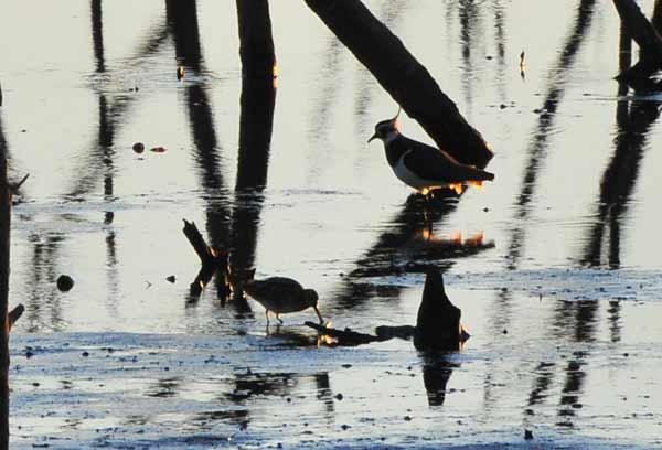 鳥撮り散らかした~_e0097534_12582684.jpg
