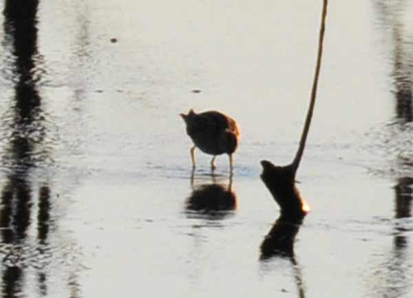 鳥撮り散らかした~_e0097534_1301420.jpg