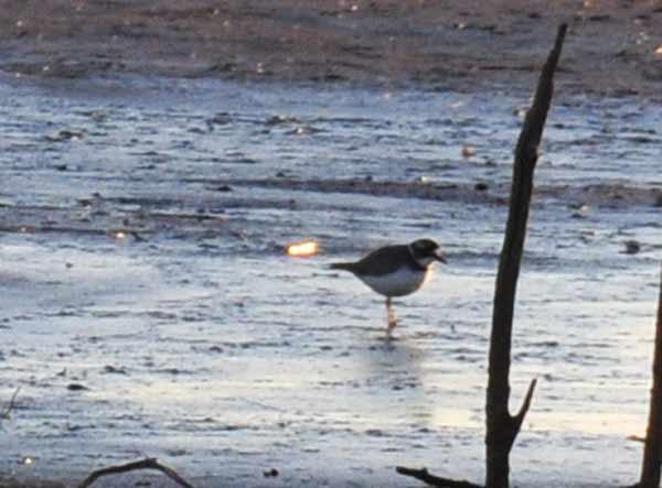 鳥撮り散らかした~_e0097534_131402.jpg
