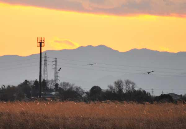 鳥撮り散らかした~_e0097534_133018.jpg