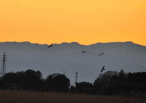 鳥撮り散らかした~_e0097534_1343094.jpg