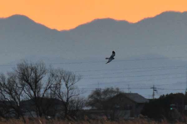 鳥撮り散らかした~_e0097534_1354011.jpg