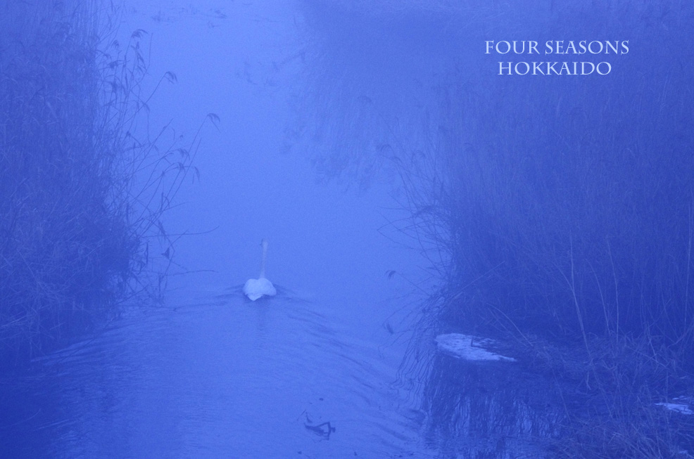 霧の朝_f0152939_5405525.jpg