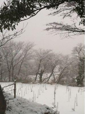 雪景色_a0197647_13363695.jpg