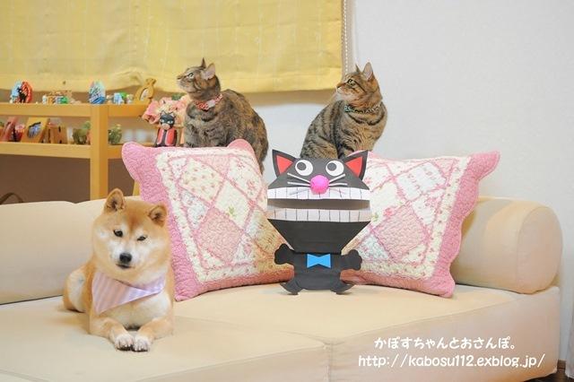 猫だぞ!_a0126590_23092948.jpg