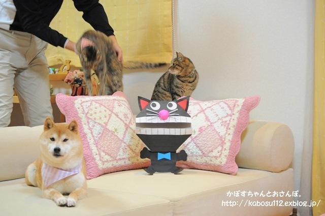 猫だぞ!_a0126590_23562566.jpg