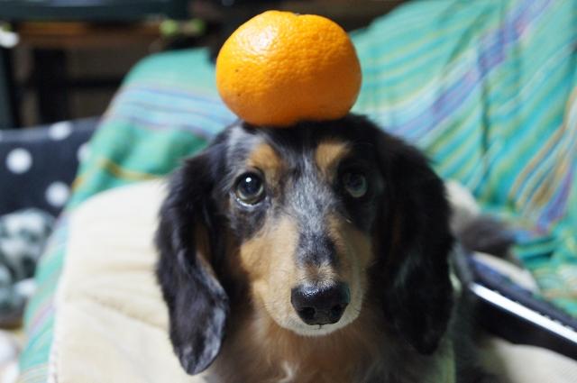 ベジタリアン犬_f0195891_20545081.jpg