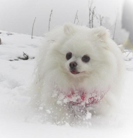 京都の山で雪遊び_b0177436_20273154.jpg